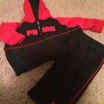 Puma Infant Sweatsuit Size 12m Photo