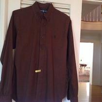 Ralph Lauren Custom Fit Brown Cotton  Mens Dress Shirt Size Medium Free Ship Photo