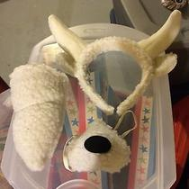 Sheep / Lamb Ears Nose and Tail Brand New Photo