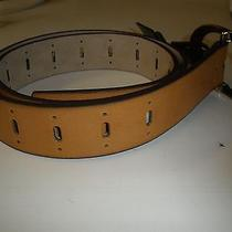 Style & Co Belt Brown L Large Everyday Value Buckle New Gold Buckle Photo