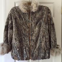 Super Fun Persian Lamb  Fur Jacket With Fox Collar & Cuffs   Small    Photo