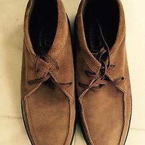 Tod's Mens Suede Shoes Photo