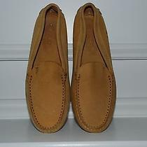 Tods Original Driving Shoe 9 Photo