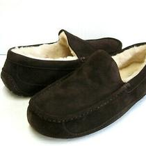 Ugg Ascot Men Slipper Suede Espresso Wide Us 11 3e /uk 10 /eu 44 Photo