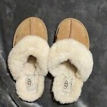 Ugg Slippers Photo
