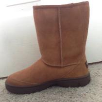 Uggs Size 8 Chestnut Photo
