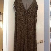 Women's Dress Photo