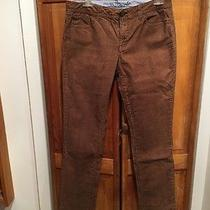 Women's Tommy Hilfiger Hounds - Tooth Pants - Modern Straight Size 8  Photo