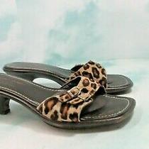 Womens Donald J Pliner Leopard Calf Hair Kitten Heel Mules/sandals Size 8.5 Photo