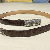 Womens Medium Brown Leather Croc Brighton Belt Ornate Buckle & Tip Gently Worn Photo