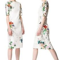 Zara Bnwt Floral Tropical Oriental Dress Pencil Bloggers Fave Medium Free Ship Photo